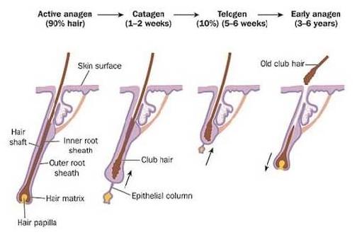 Hair Fall Treatment in Hyderabad, Hair Fall Treatment